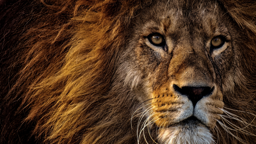 LION C E